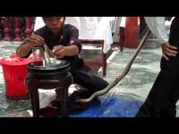 คลิป เมนูพิสดาร กินงูเห่าสดๆ ที่เวียดนาม ขนลุกเลย