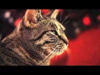 คลิป คลิปแมวร้องเพลงที่น่ารักที่สุดในโลก