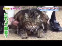 แมว น่ารัก อ้วน