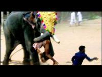ช้าง, ช้างตกมัน, สุดโหด, โจมตี, จู่โจม, ทำร้าย, บาดเจ็บสาหัส, โมโห, อินเดีย, สยอง, น่ากลัว, อันตราย,