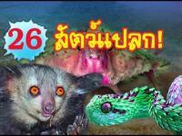 สัตว์, สัตว์แปลก, สัตว์ประหลาด, แปลก, เรื่องแปลก, ประหลาด, สัตว์หายาก, สายพันธุ์สัตว์แปลก, แปลกแต่จร