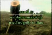ยาง ยางพารา การสร้างสวนยาง การปลูกยาง สำนักงานกองทุนสงเคราะห์การทำสวนยาง
