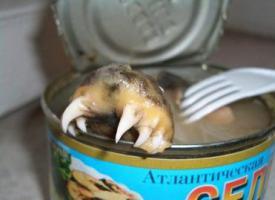 ปลากกะป๋องแบบนี้คัยกล้ากินมั่ง