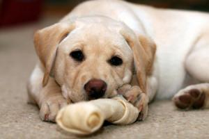 สุนัขกว่า 13 ตัวตายปริศนา หลังกลับจากทางเดินอาถรรพ์