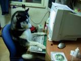 สัตว์เลี้ยง หมา สุนัข แมว น่ารัก คอมพิวเตอร์ เทคโนโลยี ตลก ขำขัน