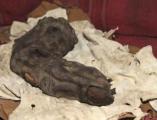 ค้นพบ นิ้วมือขนาดยักษ์ ยาว 38 เซนติเมตร Gregor Spörri