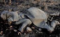 ฆ่าช้าง งาช้าง ล่าช้าง แอฟริกา