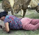 นักท่องเที่ยว, สวนสัตว์, เสือชีตาร์, เสื้อ