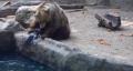 """คลิปซึ้งๆ!! """"หมีช่วยชีวิตอีกาที่กำลังจะจมน้ำ"""" ที่สวนสัตว์ในกรุงบูดาเปสต์ ประเทศฮ"""