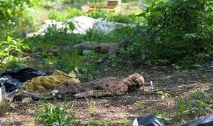สยอง ภาพ ฟาร์ม ศพ น่ากลัว