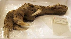 10 สิ่งสุดผวา ที่นักโบราณคดีเคยขุดเจอ