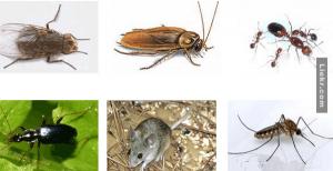 มาใช้วิธีธรรมชาติ เพื่อขจัดแมลงสาบ ยุง และมดให้หายเกลี้ยง!