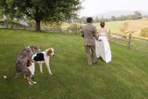 25 ภาพการแต่งงานสุดฮาที่ถูกขโมยซีน