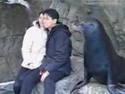 คลิป แมวน้ำเจ้าชู้ the kissing seal