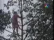 ภาพจริง เสียงจริง คนตกต้นไม้