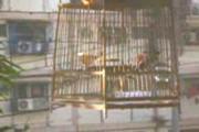 คลิป สัตว์เลี้ยว นกกรง