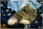 สำหรับคนรักแมว3