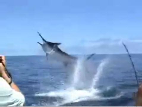 Marlins Attack ตกปลาทะเล