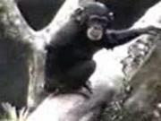 คลิป ลิง monkey