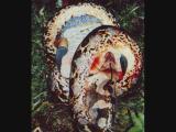 งูกินคน งูเขมือบคน งูยักษ์ มนุษย์ งู กิน คน สุดสยอง อนาคอนด้า