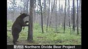 หมีเต้นรูดเสา เสียวดี