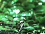 คลิป กบ แมลง สัตว์ ชีวิตสัตว์ แมลงปอ ภาพช้า ขำๆ