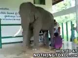 รีด น้ำเชื้อ ช้างไทย