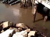 คลิป สึนามิ แผ่่นดินไหว ชิลี