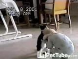 แมว สัตว์เลี้ยง สัตว์เลี้ยงน่ารัก ตลก ขำๆ เด็ก มวยปล้ำ สัตว์ เล่น สนุก ครอบครัว