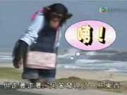 คลิป ขำกลิ้งลิงกับหมา  dog monkey funny game show