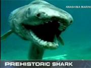 Prehistoric shark old fish animal discovery breaking news