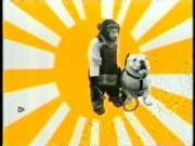 คลิป ขำกลิ้งลิงกับหมา ช่อง9 monkey and dog