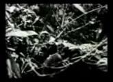 คลิป สงคราม กองทัพ อังกฤษ ทหาร รบ ยิง ญี่ปุ่น พม่า สงครามโลกครั้งที่2 หาดูยาก Uk Army