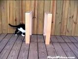 คลิป แมวหาย ไปไหน ภาพลวงตา