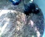 คลิป ไอ้โทนี่3.3 พม่ายักษ์