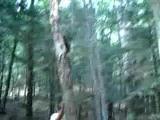 คลิป พลาด ล้ม ต้นไม้ อุบัติเหตุ เต็ม หน้า โค้น