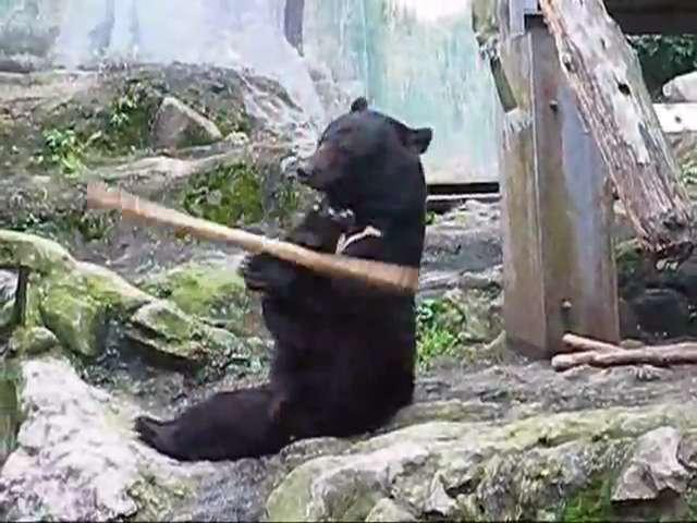 คลิป หมี กังฟู kung fu beer