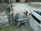 คลิป เต่า หมา สุนัก เชื่องช้า เร็วหน่อยได้ไหม