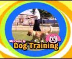 การ ฝึก สุนัข Dog Training