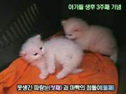 คลิป แมว ลูกแมว 2 ลูกแมวเล่นกันน่ารักดีค่ะ^^