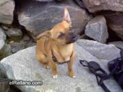 คลิป น่ารัก หมา สุนัข สัตว์ ตลก