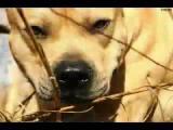 หมา สุนัข ตลก ขำๆ ฮา เฮฮา คลายเครียด สัตว์เลี้ยง สัตว์ Barkour ปาเกียว