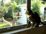 คลิป Cat and squirrel แมว น่ารักๆ สัตว์