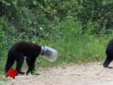 หมีหัวติดขวดโหล ที่รัฐฟลอริด้า สหรัฐฯ