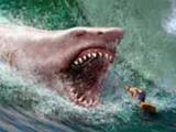 คลิป ปลาฉลามยักษ์