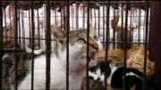คลิป เวียดนามฮิตกินแมว อาหารนำโชคปี 2011