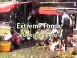 คลิป อาหารป่า เกาะสุราเวสี -  อินโดนีเซีย