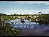 งูยักษ์ อนาคอนด้า