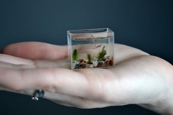 การประดิษฐ์ตู้ปลาเล็กที่สุดในโลก