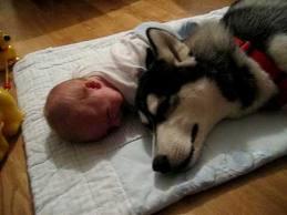 คลิป เด็กน้อย VS น้องหมา มาดูกันว่า ใครจะขี้แงกว่ากัน